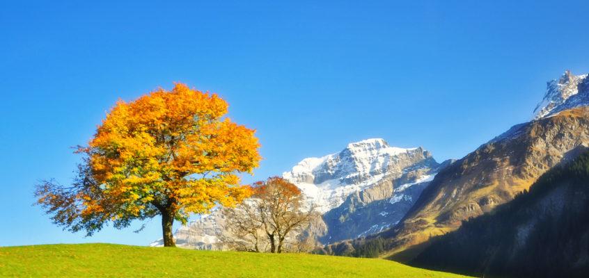 阿尔卑斯的秋天 Autumn in Alps