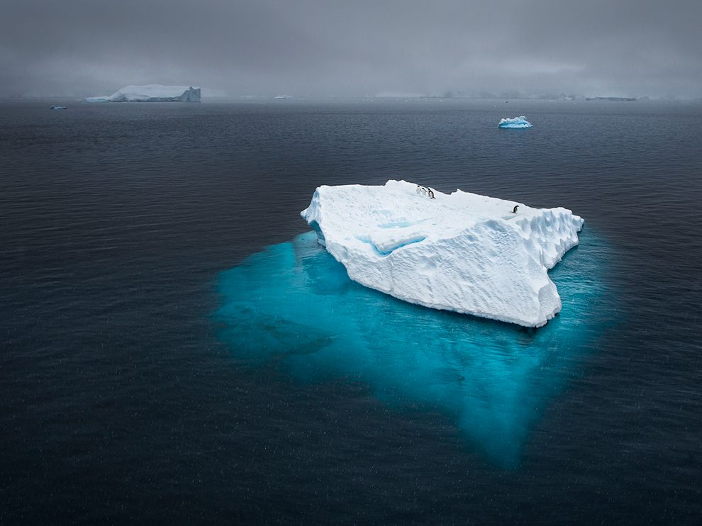 Penguins, Antarctica 企鹅,南极洲