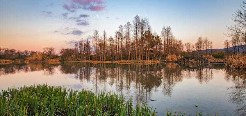 西溪湿地风光